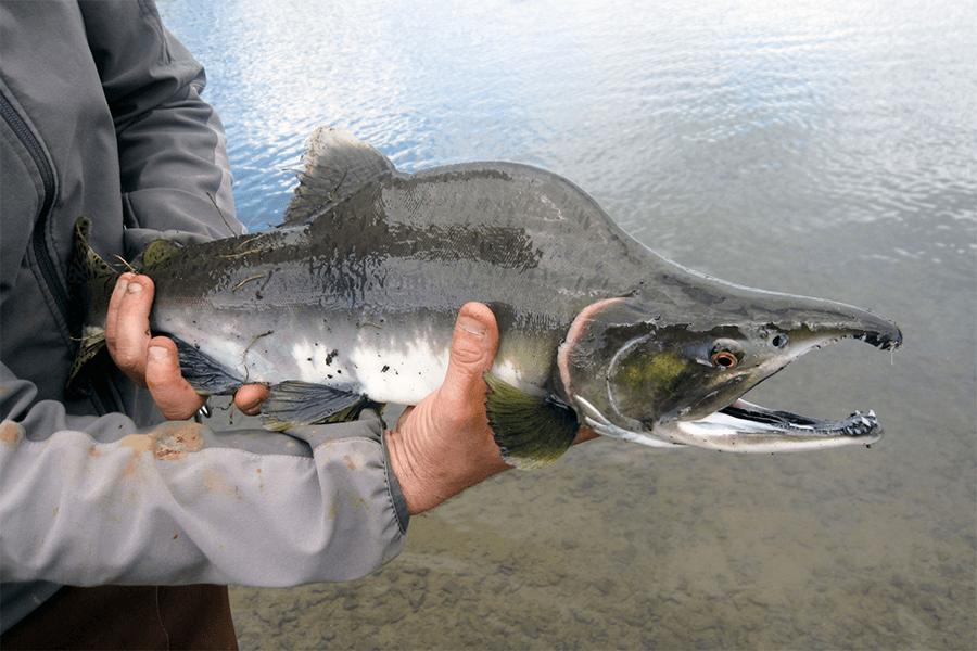 fishing-fresh-water-fish